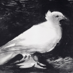 dove-by-picasso